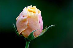Rose im November - Jahreszeiten - Galerie - Community
