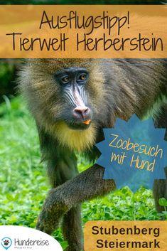 Ausflug in den Tierpark Herberstein mit Hund. Ein Zoo in der Steiermark, wo Hunde erlaubt sind.   Hund | Hunde | Ausflug | Tipp | Österreich Park, Austria, Animals, Travel, Animals Dog, Cats, Pet Dogs, Dog Accessories, Road Trip Destinations