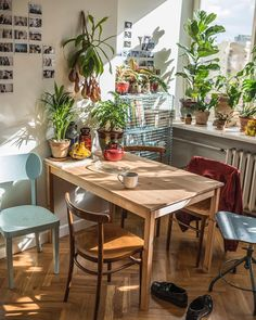 Beata and Remek live in a teeny tiny apartment but they don't let this stop them building an extensive houseplant collection.