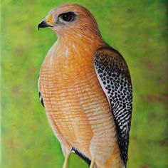 Buy Hawk - A bird, Oil painting by Goutami Mishra on Artfinder. Discover thousands of other original paintings, prints, sculptures and photography from independent artists. India Painting, Oil Painting On Canvas, Canvas Art, Artwork Online, Online Painting, Original Art, Original Paintings, Birds Of America, Bird Artwork