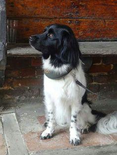 Hond 2011