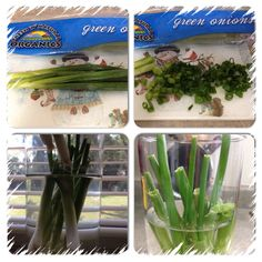 Buy green onions . After you used never throw away that white part with hair .  Just put them inside glass with water.  Then put the glass where the sunlight hit In your kitchen window .  Green onion will grow real fast ! You will have fresh green onions again .  3 days ! Ready to eat !  Enjoy ! Fresh Green, Green Onions, Fresco, Celery, Sunlight, Benefit, Window, Herbs, Organic