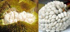 15 extrañas frutas que tal vez no conozcas - Marang