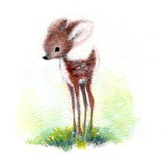 fawn drawing - Google Search