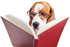 """The Pet PT Pit Stop: """"Dear Diary"""" - A Practical Method to manage your Dog's Care Plan"""