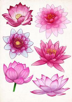 Flower Drawing FelineTrickster Artwork — Some pink Lotus flower studies Plant Drawing, Mandala Drawing, Lotus Drawing, Drawing Pin, Watercolor Flowers, Watercolor Art, Watercolor Lotus Tattoo, Lotus Flower Mandala, Lotis Flower