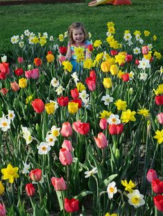 Dig In: An Employee's Spring Blooming Garden Success