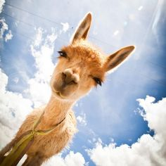Giraffe, Elephant, Watercolor Whale, Peru, Mammals, Creatures, Horses, Instagram, Dogs