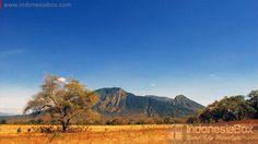 Baluran National Park. Jawa Timur. Indonesia