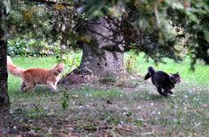"""Real Cats Don't Eat Beans """"Hey, why are you running?""""  """"You'll know in a second."""""""