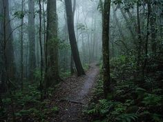 Misty forest after the rain by J-Hob, via Flickr