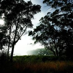 Misty mornings fading out to a sun-shiney summers day. A perfect morning to start art classes xx #countryliving #Daylesford #summer #metime