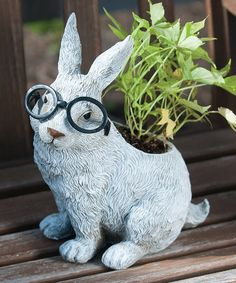 Look at this #zulilyfind! Rabbit in Glasses Planter #zulilyfinds