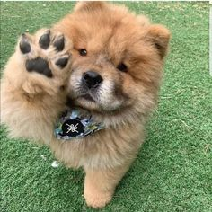 Nice to meet you! Baby Animals Super Cute, Cute Baby Dogs, Cute Cats And Dogs, Cute Dogs And Puppies, Cute Little Animals, Cute Funny Animals, Doggies, Fluffy Dogs, Fluffy Animals