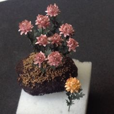 I have been making miniature chrysanthemums for the Tasha Tudor garden. There are many different looks and ways to make the chrysanthemum, this is my version. The pink in the…