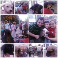 Campaña de adopcion 30/03/13