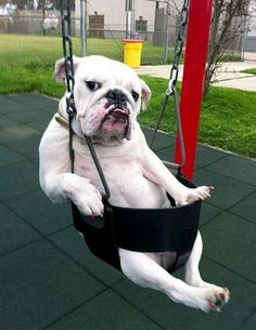 22 Animals That Are Trying Hard To Be Human