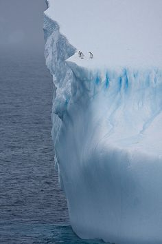 iceberg #penguins