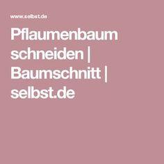 Pflaumenbaum schneiden | Baumschnitt | selbst.de