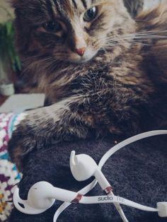 Musiikki kulkee mukanani kaikkialla ja hyvät kuulokkeet ovat tarpeen. Postaus toteutettu yhteistyössä Sudio Swedenin kanssa ja sisältää alekoodin heille!    #sudio #sudiosweden #sudiomoments #cat #earbuds #earphones #music Cute Cats, Lifestyle, Animals, Pretty Cats, Animales, Animaux, Animal, Animais