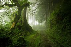 I'm lucky enough to live in the Pacific Northwest, and aside from hipsters and imminent megathrust earthquakes, we have some of the most beautiful forests I've ever set foot in.  The massive trees, the undergrowth of ferns, the moss on everything; I love it all. But my neck of the woods aren't the o...