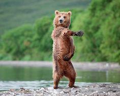 I like to move it, move it!! ;)