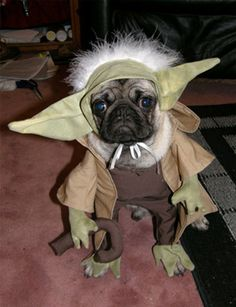Yoda Dog! Bahahaha