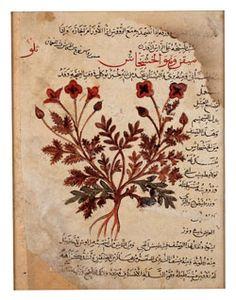 """Résultat de recherche d'images pour """"l'herbier d'al ghafiqi livre des secrets"""""""