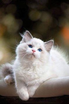 Dreamy Eyes. You've got such Dreamy Eyes.