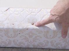 Как легко избавиться от паразитов и постельных клопов в спальном матрасе