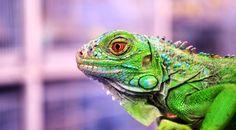 """Chameleon"" by Sanjiban Ghosh"