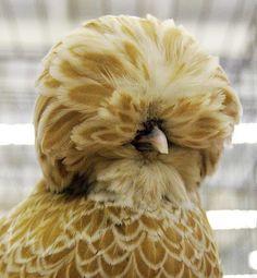 Chicken coop cleanliness