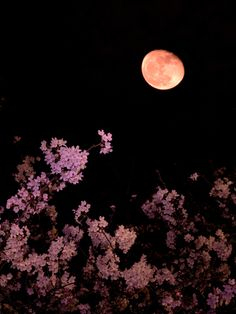 """""""Cherry blossoms moon"""" Perfect <3"""