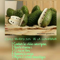 www.tropical-gourmet.com Pulpa de fruta natural Beneficios de la Guanabana