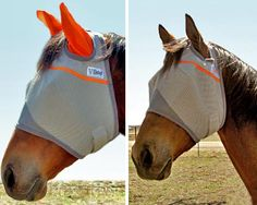 Orange Trimmed Fly Mask for Hazzard!