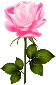 Gallery - Recent updates Beautiful Flowers Images, Beautiful Flowers Wallpapers, Beautiful Flowers Garden, Flower Images, Exotic Flowers, Flower Pictures, Beautiful Roses, Rose Flower Png, Flower Art