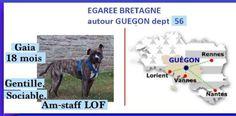 perdue secteur Guégon