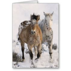 Two Appaloosas Horse Greeting Card by Carol Walker http://www.zazzle.com/savewildhorses?