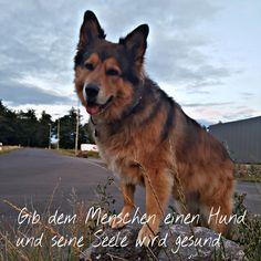 Hunde Foto: Micha und Mogli - Einfach mal so 🐶 Hier Dein Bild hochladen: http://ichliebehunde.com/hund-des-tages  #hund #hunde #hundebild #hundebilder #dog #dogs #dogfun  #dogpic #dogpictures