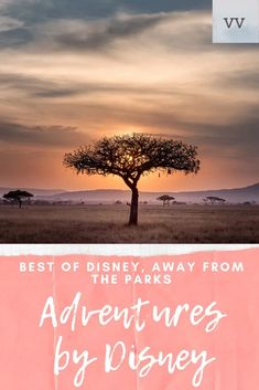 This Disney Vacation has opportunities all around the world on nearly every continent to provide you with the culturally immersive experiences you crave. Disneyland Trip, Disney Vacations, Disney Trips, Disney Travel, Travel With Kids, Family Travel, Disney Magic, Walt Disney, Adventures By Disney