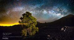 Pino estelar. Ejemplar de pino canario bajo las estrellas en el Llano de Jable. Camera: Canon EOS 6D Lens: Samyang 14mm Focal Length: 14mm Shutter Speed: 30sec Aperture: f/2.8 ISO/Film: 12800 Image credit: http://ift.tt/29RT31F Visit http://ift.tt/1qPHad3 and read how to see the #MilkyWay #Galaxy #Stars #Nightscape #Astrophotography