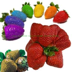 Cheap strawberry seeds, Buy Quality seeds organic directly from China organic strawberry seed Suppliers: 100pcs/bag 24 Kinds strawberry Collection bonsai giant fruit strawberry seeds Organic Non-GMO pot for home garden plant