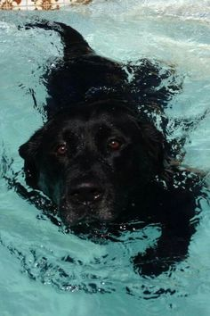 Taking a swim.