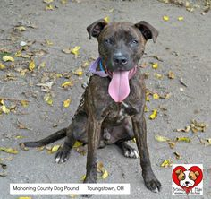 URGENT!!! MOBY>>>YOUNGSTOWN, OHIO. CONTACT: stoohey@mahoningcountyoh.govAvailable:8/12Moby had been living on the streets. Some very kind young ladies took pity on him and started feeding him. They were able to catch him and brought him to the pound hoping that he would find a great...