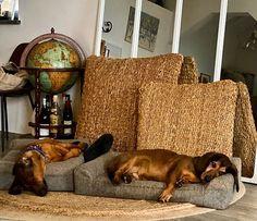 Vogliamo rassicurare quanti ci chiedono notizie di Atena e Zeus: il loro periodo di quarantena procede senza troppo stress... Diciamo che riposano per potervi poi accogliere al meglio   #oasilevanto #dogslife #hotellife #hotellifestyle #dogslover Hotel, Stress, Instagram, Anxiety