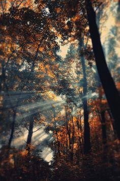 Autumn rays by Taras  Bychko on 500px