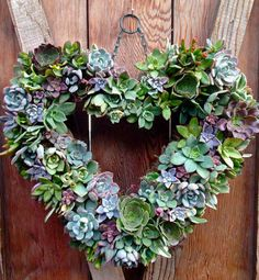"14"" Living Succulent Heart Wreath- The perfect Valentine's Day Present,  Birthday Present,  Anniversary Gift, Wedding Decoration and more"