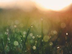 sunset, grass, nature, outdoors, field, blurry, bokeh, summer