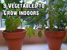 9 Vegetables to Grow Indoors: Mushrooms, carrots, tomatoes and other popular vegetables can be raised indoors. Slide show on Reader's Digest at http://www.rd.com/slideshows/9-vegetables-to-grow-indoors/#slideshow=slide1