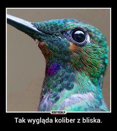 Tak wygląda koliber z bliska.